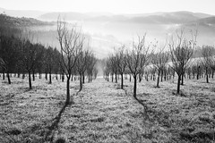 lhota (I.Dostl) Tags: white black landscape bn cb lhoty