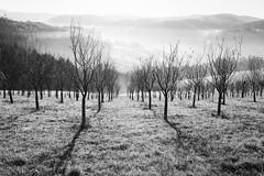 lhota (I.Dostál) Tags: white black landscape bn cb lhoty