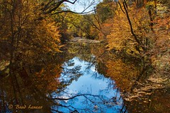 A touch of color (ghostrider_200) Tags: nature canon flickr fallcolor wildlife northcarolina canon7d