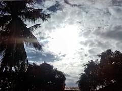 sun,tree and clouds (eloi1215) Tags: sky sun tree green nature beautiful clouds photography nikon citylife capturedmoments awesomeshots welovenature moststunningshot flickrandroidapp:filter=none rebelsunited beproudofyourownart boredomeshot