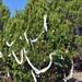 Trees_of_Loop_360_2013_131