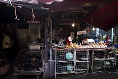 Fresh and Fresher (Khlong Toey Market, Bangkok) (Thainlin Tay) Tags: people food chicken wet thailand market bangkok live stall cage fresh poultry slaughter thai vendor produce local toey khlong