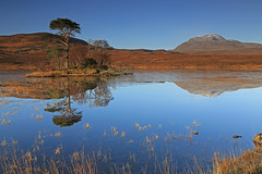 Loch Awe Reflections. (Gordie Broon.) Tags: november trees moon mountain ice nature water reflections reeds landscape island scotland scenery alba scenic escocia hills snowcapped corbett schottland ullapool lochawe ecosse lochinver scozia assynt inchnadamph scotspine canisp 2013 canon24105l scottishwesternhighlands gordiebroonphotography canon5dmklll