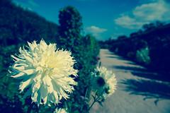 Botanic Garden - Paris (bortescristian) Tags: autumn 2 paris france slr digital canon eos d mark 5 september ii mk2 5d toamna francia cristian mk septembrie  mkii parigi franta mark2    2013  bortes bortescristian cristianbortes frnkrich