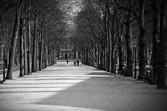 Escher museum in the distance (PIVAMA|photography) Tags: trees tree museum bomen denhaag boom escher lange voorhout gravenhage sgravenhage