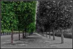 Bianco/Nero/Verde (Maulamb) Tags: alberi parigi viale