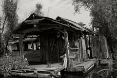 HQueen (wmkaramjr) Tags: la moss louisiana gators bayou cajun cypresstrees acadiana henederson