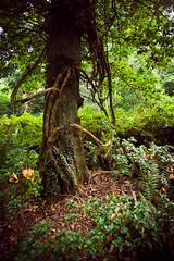 Hide & Seek (jbwan) Tags: tree green nature forest woodland fun hide seek