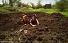 KENYA - CIVSSTV-102013 AHERO RESOURCE CENTRE, Didw Sotiropoulou (ΕΛΙΞ / ELIX) Tags: kenya workcamp 2013 κένυα elixconservationvolunteersgreece ελιξπρογραμματαεθελοντικησεργασιασ civskenya