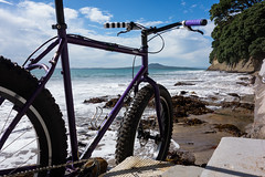 Turnaround Bright Eyes (ibikenz) Tags: seagulls beach bike bicycle volcano gulls auckland singlespeed pugsley surly rangitoto waitemataharbour beachride campbellsbay fatbike rx100 fuckitletsgoridebikes sonycybershotdscrx100