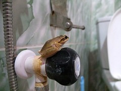 Sri Lanka toilet frog (dover.rebecca) Tags: life travelling beach coast back packing east bums nomad everyday