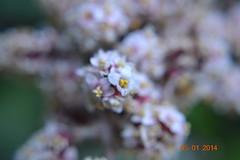 DSC_0249 (kazadmanesh) Tags: و بهار خشکسالی
