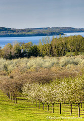 Spring Color Tour ... hues of new II (Ken Scott) Tags: usa spring view michigan april vista cherryblossom suttonsbay orchards 2014 grandtraversebay leelanau 45thparallel backpage kenscottphotography kenscottphotographycom
