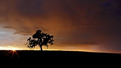 Almost Home (ernogy) Tags: california ca storm tree silhouette landscape oak folsom sacramento prairie scottroad ernogy