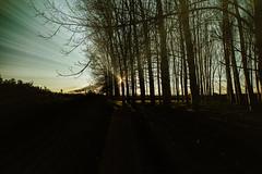treeland