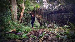 Passeio no Bosque