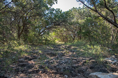 Trail - Government Canyon State Natural Area - Bexar County - Texas - 11 September 2016 (goatlockerguns) Tags: live oak government canyon state natural area bexar county texas nature park statepark trees tree forest hillcountry usa unitedstatesofamerica south southern southwest west