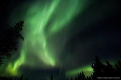 IMG_2547 (F@bione©) Tags: lapponia lapland marzo 2017 husky aurora boreale northenlight circolo polare artico rovagnemi finalndia finland