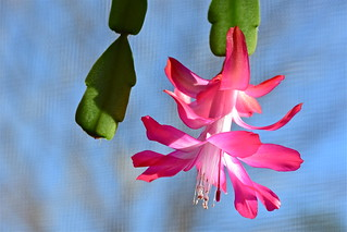 petals all atwirl