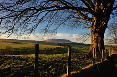 Over the fence (images@twiston) Tags: fence blue sky green golden fields cold bare winter dawn cloudless pendle pendlehill tree trees branch branches landscape lancashire whale back grass grassland field meadow moor moorland farmland countryside sunlit morning clouds whaleback ribblevalley imagestwiston todber forestofbowland aonb shadow fencepost post sheepfence sheepwire barbedwire hff happy friday