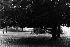 (lemonhats) Tags: asahipentaxsp spotmatic smctakumar1450 fomapancreative200 160 f8 classiccamera vintagecamera mechanicalslr classiclens vintagelens manualfocusprimelens 50mmf14 iso200 白黒、blackandwhite 35mmprintfilm traditionalphotography analoguephotography filmphotography filmisnotdead filmisalive shootfilm believeinfilm filmcommunity fpper walking hikarigaokapark nerimaku tokyoto japan bicycles kodakd76