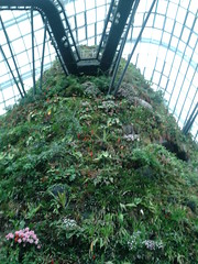20130206_160008 (srbarnettuk) Tags: gardens by bay dome cloudforest gardensbythebay supertree