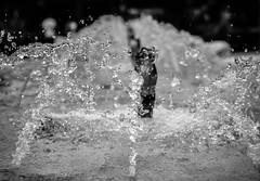 噴水(Water Spray) (britfatcat) Tags: bw water nikon spray 黑白 d800 微距 水滴 噴水