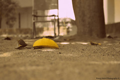 I Need Some Attention. (Rimzy Mahil) Tags: life color love yellow leaf nikon peace culture simple kandy ilove srilankan noracism dayandnight d3200 onecountry