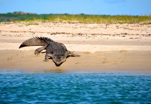 Nhulunbuy Australia  City new picture : ... : Recent photos from Nhulunbuy, Northern Territory, Australia