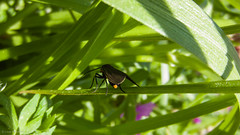 Vertical (Louie McKeown) Tags: macro outdoors daylight insects foliage