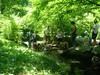7-22-2012ArnoldArboretum023