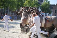 trekpaardkeuring ijzendijke 21072013 4039 (jo_koneko_san) Tags: horses horse holland netherlands cheval nederland zeeland chevaux paard hollande zeeuwsvlaanderen 2013 ijzendijke parden trekpaard zeeuwstrekpaard trekparden