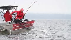 30901102 (QCL Shooter) Tags: fishing bc britishcolumbia salmon salmonfishing sportfishing qcl fishinglodge haidagwaii queencharlottelodge bcfishing markkasumovich qclfishing