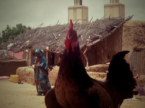 Wothie, Mauritanie