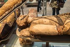 Mummies of the Ptolemaic and Roman periods (Jose Antonio Abad) Tags: inglaterra england london museum unitedkingdom londres museo britishmuseum reinounido pblica josantonioabad