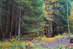 il bosco di Gola IMG_5365 (gianni.giacometti) Tags: italia autunno carnia bosco friuli ravascletto comeglians