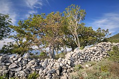 Stone wall (Uros P.hotography) Tags: sea sky cloud flower color colour mill tourism nature beautiful clouds photoshop island amazing fantastic nikon europe tour view superb path unique awesome famous olive rosa eu croatia sigma more glorious journey salvia stunning excellent lovely striking incredible 1020 unforgettable brilliant hdr breathtaking extraordinary aweinspiring communis adriatic remarkable monumental stupendous hrvatska canina jadran memorable d300 exceptional cres officinalis juniperus morje photomatix kvarner acclaimed hrvaka slod300