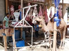Bairam-Straßenschlachterei (lumobu_2) Tags: alexandria egypt camel ägypten egitto kamel cammello bairam opferfest festadelsacrificio