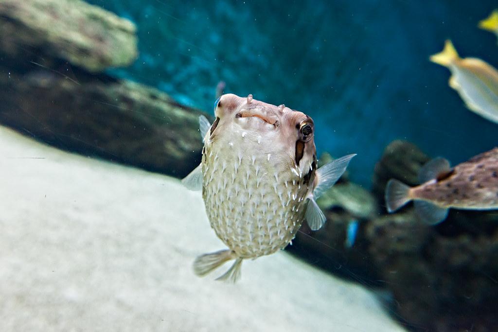 aquarium le 7 232 me continent 224 talmont hilaire accueil