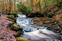2742a - Autumn at Harden Beck (foxxyg2) Tags: water yorkshire waterf