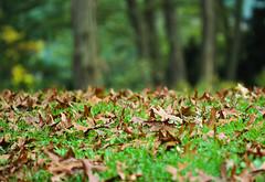Just recall Autumn (Igor.Kanshyn) Tags: autumn toronto highpark