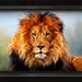 "A Lion doesn't lose sleep over the opinion of Sheep. • <a style=""font-size:0.8em;"" href=""http://www.flickr.com/photos/9123035@N07/12530183043/"" target=""_blank"">View on Flickr</a>"