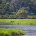 Loango 8 - Elephant Pair 1