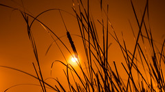 Artificial sun (Andrii Zymohliad) Tags: reed nature landscape