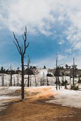 Bare Branches (wenzday01) Tags: park travel tree nature nationalpark nikon trunk yellowstonenationalpark yellowstone wyo