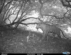 "Camera trap picture from Shendurney Widlife Sanctuary • <a style=""font-size:0.8em;"" href=""http://www.flickr.com/photos/109145777@N03/13794528025/"" target=""_blank"">View on Flickr</a>"