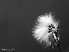 Blurry (skippys1229) Tags: macro canon blurry 100mm macrolens 52weeks 70d 2152 52weeksproject canon70d 52weeksof2014