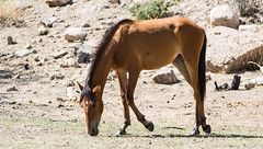 Wild Horse Series by Valerie Cozart (valeriecozart) Tags: morning red summer arizona horses brown white green nature water river outdoors grey freedom desert wildlife lakes tan rivers colts ponies wildhorses roan naturephotography foals saguarolake wildlifephotography wildlifephotographybyvaleriecozart naturephotographybyvaleriecozart