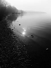 at the shore (koaxial) Tags: pc300842ajpg koaxial lake shore küste ufer stones stony steinig see water reflection spiegelung sonne sun starnberger bw black white schwarzweiss wasser