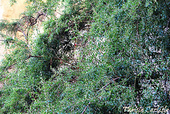 Pomegranate2 (tinlight7) Tags: pomegranate tree wadinakhar jebelshams oman taxonomy:kingdom=plantae plantae taxonomy:clade=tracheophyta tracheophyta taxonomy:phylum=magnoliophyta magnoliophyta taxonomy:class=magnoliopsida magnoliopsida taxonomy:order=myrtales myrtales taxonomy:family=lythraceae lythraceae taxonomy:genus=punica punica taxonomy:species=granatum taxonomy:binomial=punicagranatum granatapfel רימוןמצוי magraner punicagranatum granadacordelina tsapyan delima romãzeira гранатобыкновенный гранатзвычайны 安石榴 nocuanazehacastilla انار taxonomy:common=granatapfel taxonomy:common=רימוןמצוי taxonomy:common=magraner taxonomy:common=pomegranate taxonomy:common=granadacordelina taxonomy:common=tsapyan taxonomy:common=delima taxonomy:common=romãzeira taxonomy:common=гранатобыкновенный taxonomy:common=гранатзвычайны taxonomy:common=安石榴 taxonomy:common=nocuanazehacastilla taxonomy:common=انار